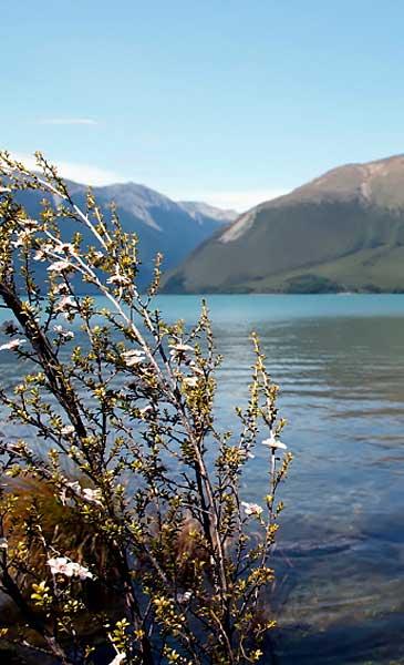 manuka-lake-view